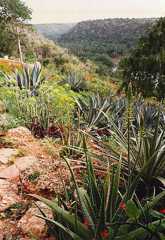 02 Colina garden view of Chavon