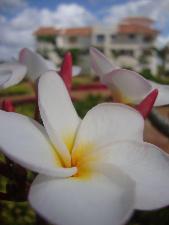 flower cadaques