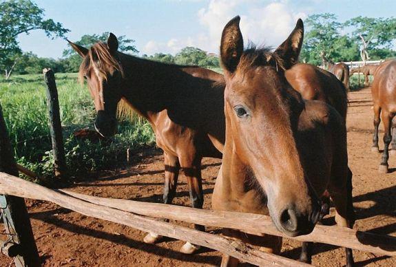 18 cute horses - Casa de Campo Living
