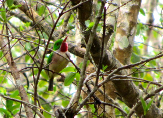 bird barrancoli