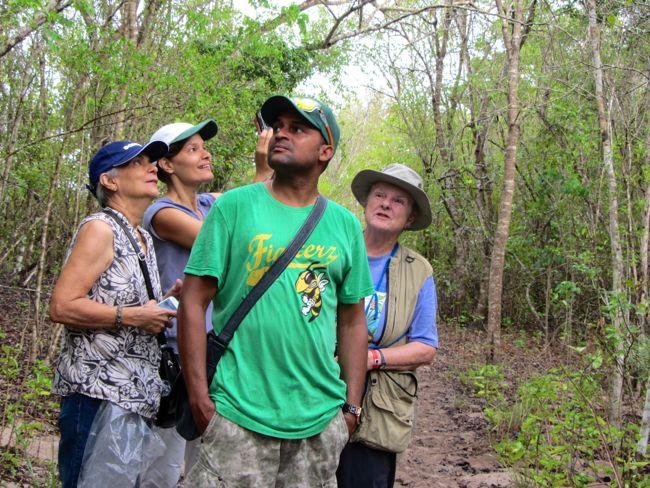 observacion aves bayahibe