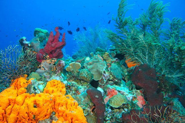 arrecifes bayahibe