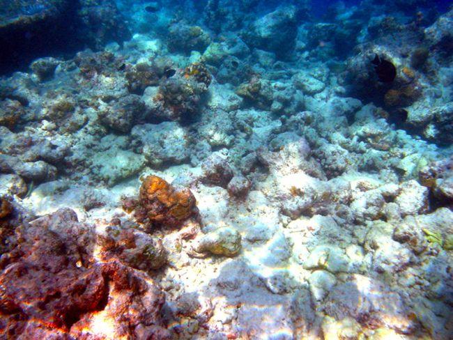 blanqueo arrecife