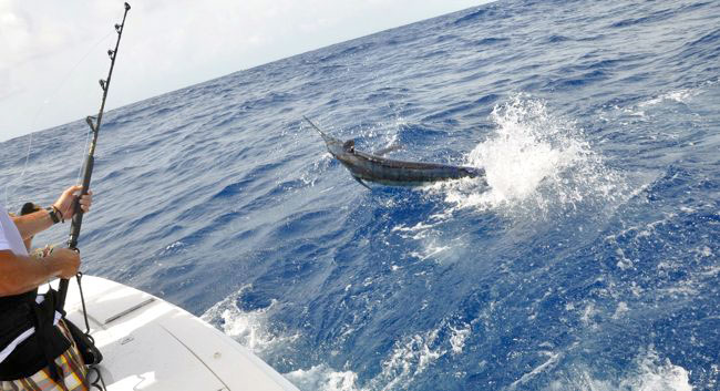 Blue Marlin Fishing
