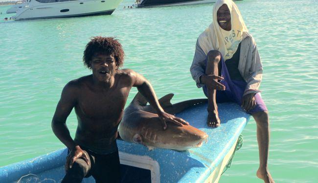 nurse shark Dominican Republic