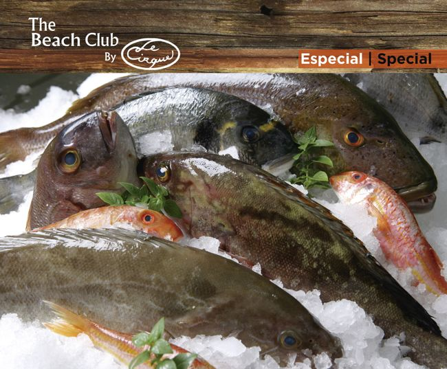 grilled fresh fish at the beach-01_header