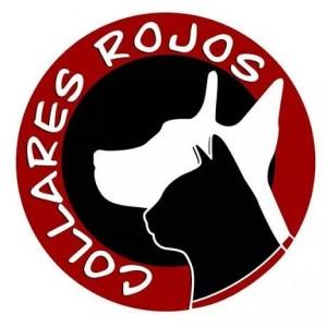 cat_dog_collares_rojos