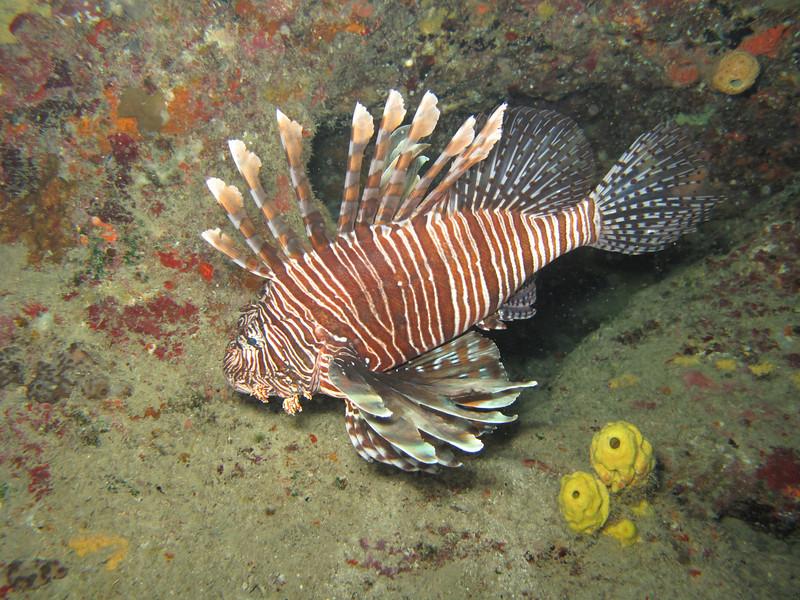 lionfish2_casa_de_campo_living