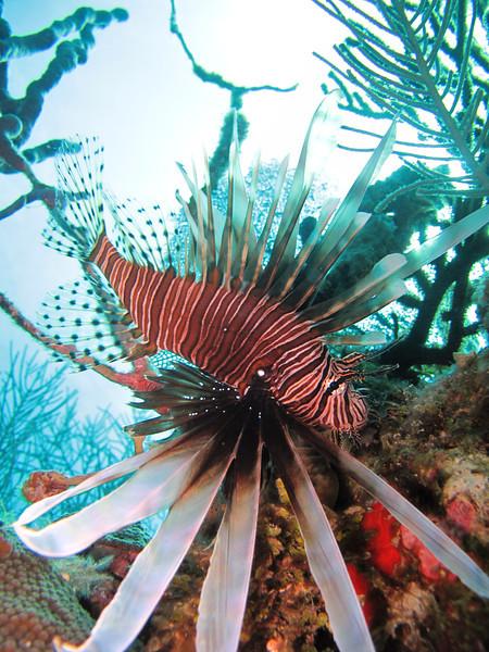 lionfish_casa_de_campo_living