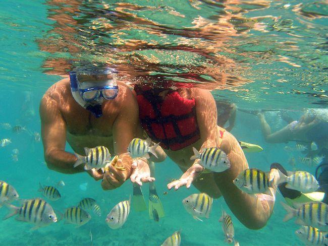 snorkelling Catalina Island