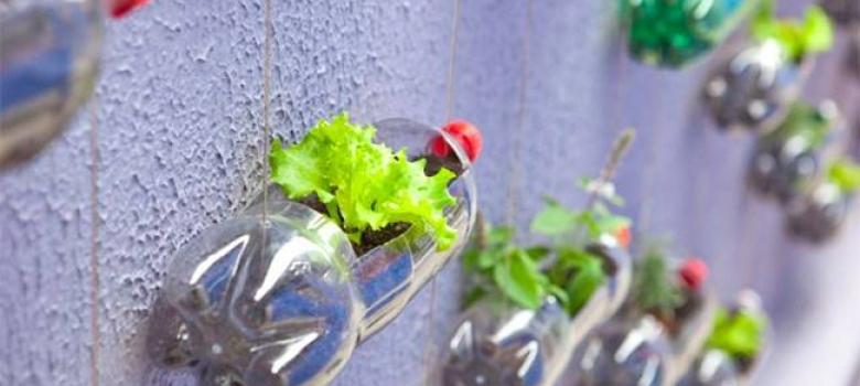Vertical_Garden_plastic_Bottles_350_780