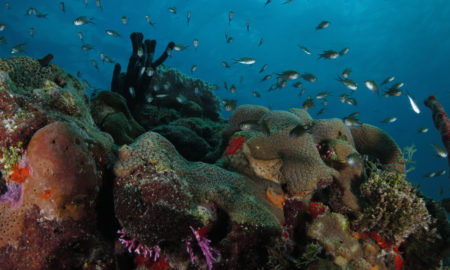 Featured Image Fundemar Coral Reef
