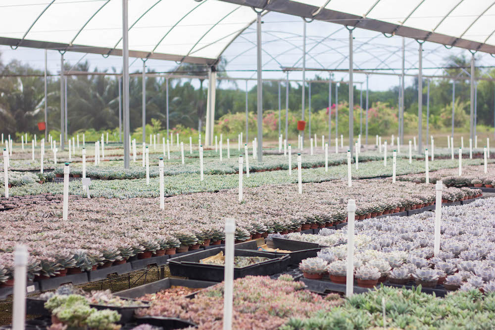 Costa Farms Nursery