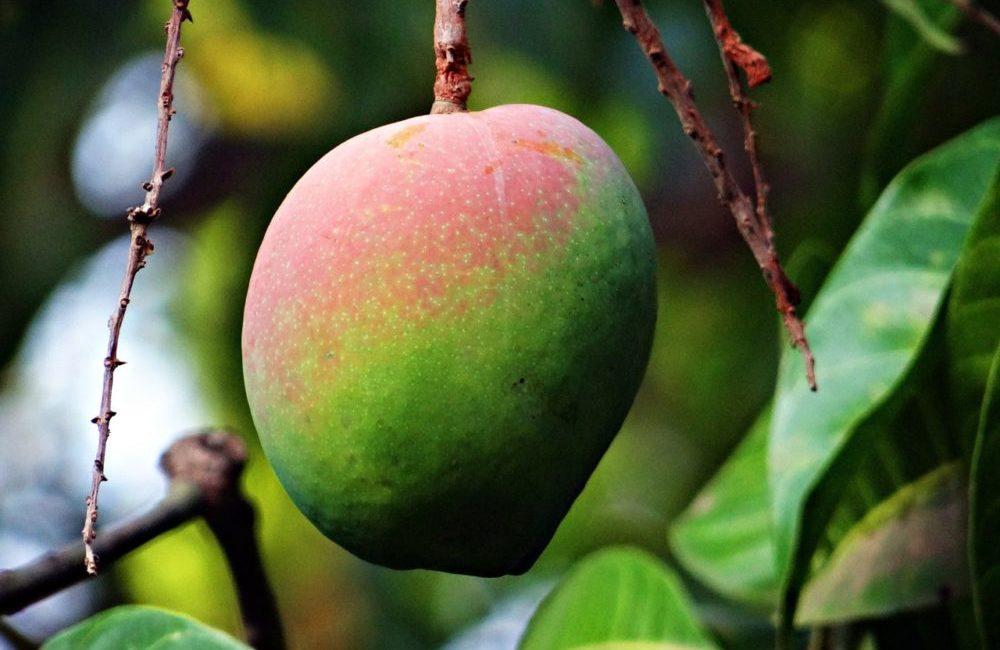 mango dessert Martinaturally